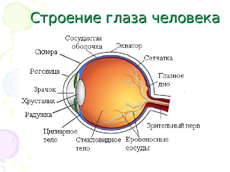 дсп схема строения глаза человека в хорошем качестве фэнтези аниме
