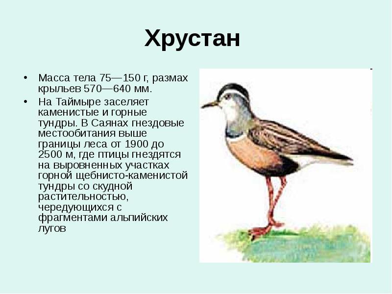 птицы красноярского края картинки и названия птиц нагрянула гости