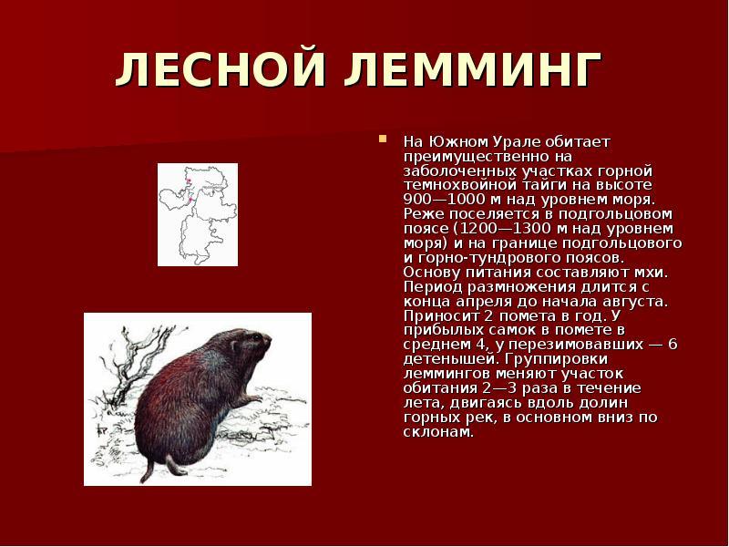 Картинки красная книга урала животные