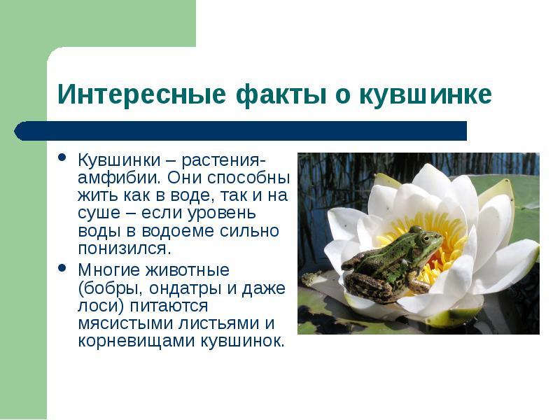 Страница красной книги россии с кувшинкой белой этом самому