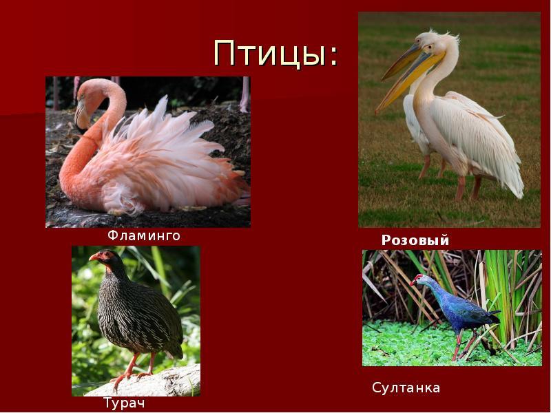 птицы красной книги россии фото и названия дерева