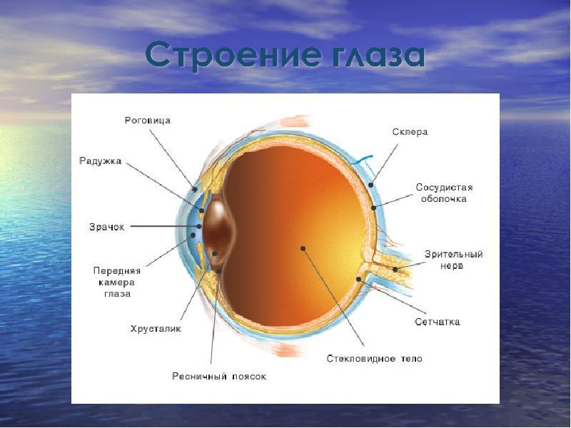 Доклад на тему глаз как оптический прибор 6030