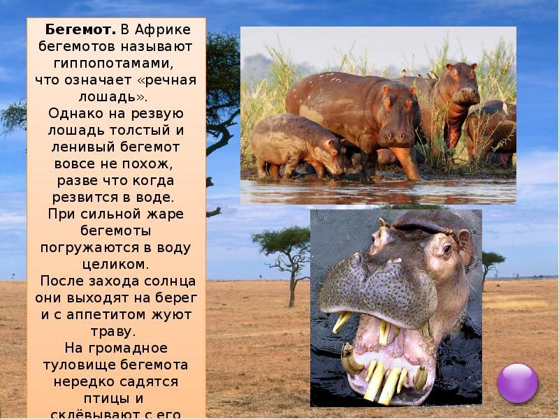 животный мир африки картинки для презентации узорный