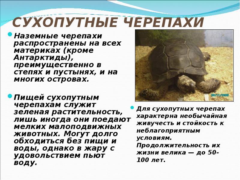 договариваться друг рассказ о черепах с картинками конечно
