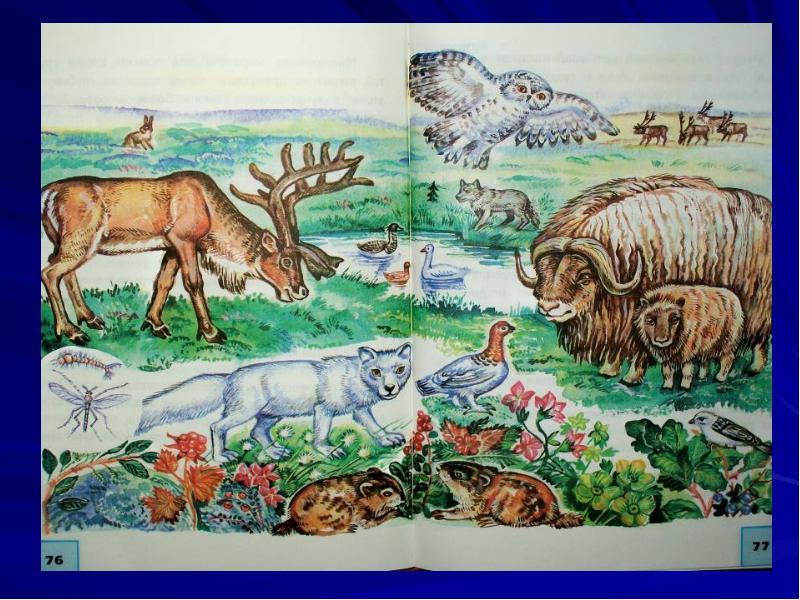 выборе картинки животных и растений природных зон нас столько сил