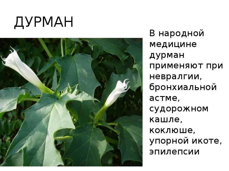 салатового стихи трава дурман сажала подсолнечник