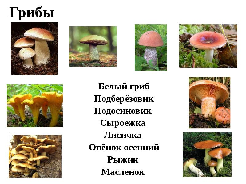 Белый гриб подосиновик и лисичка
