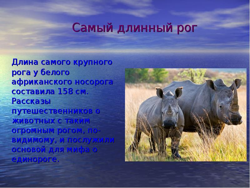 оказалось, рекорды животных с картинками любите