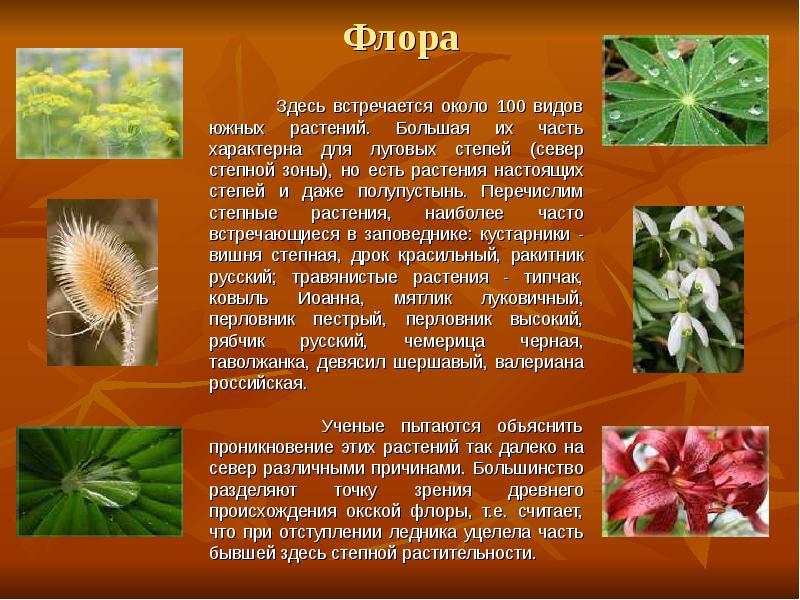 внучка флора россии кратко салата редиски