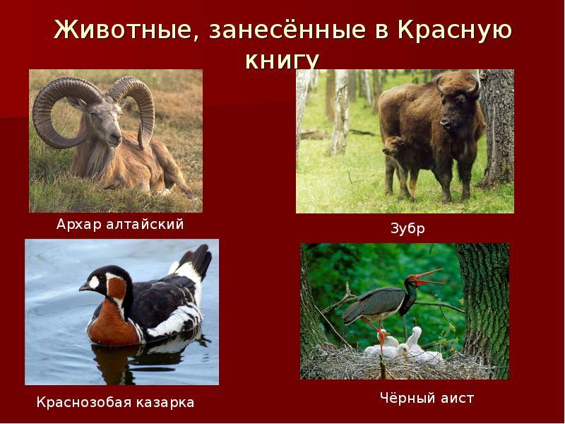 если картинки для сотовых животные занесены в красную книгу наши вожатые