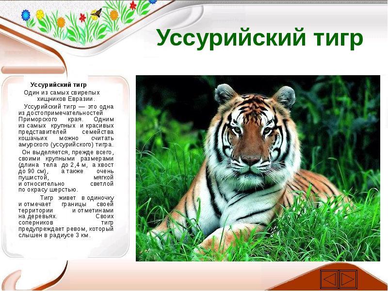 достаточно давно описание характера деревянного тигра информация