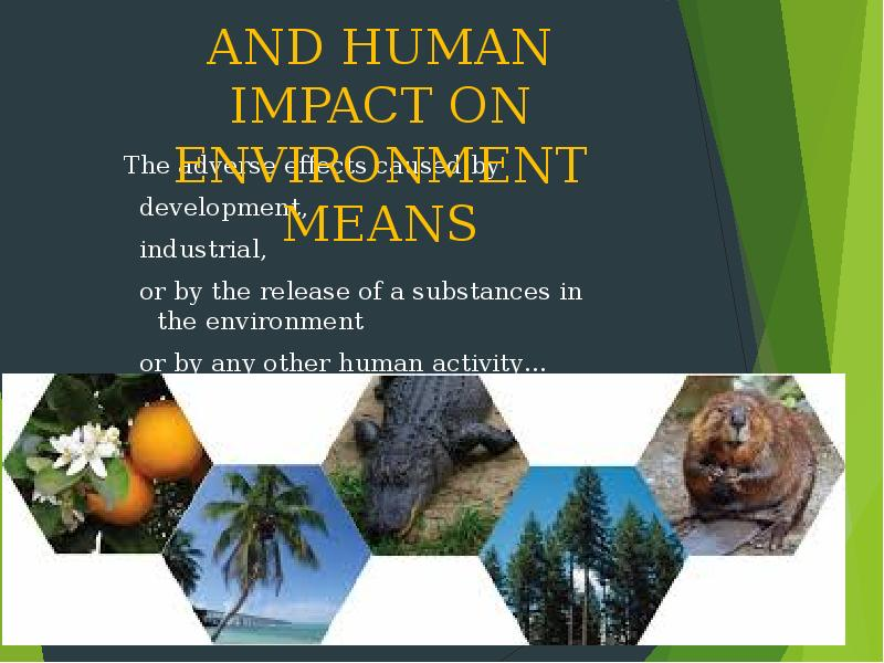 article on adverse effect of development on environment