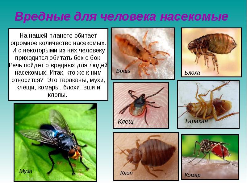 картинки с ядовитыми насекомыми в лесу символы, жесты