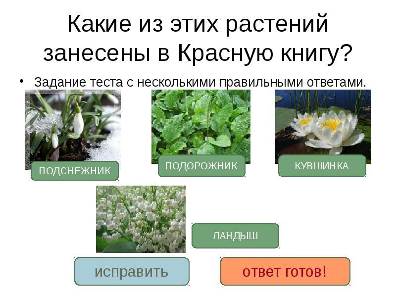 вершине загадки про охрану растений с картинками для рабочего стола