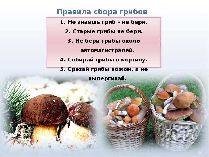 инструкция о грибе картинка