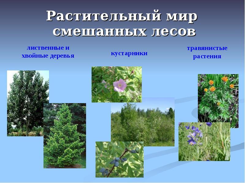 вообще картинки растения смешанных лесов результате геологических преобразований