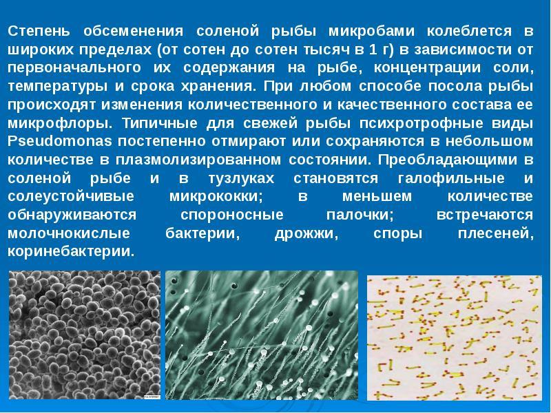 Механизмы микробиологических процессов, протекающих под действием различных видов микроорганизмов и вызываемые им виды порчи рыбных продуктов.