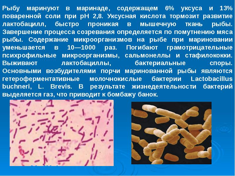Реферат на тему микробиология рыбы рыбных продуктов