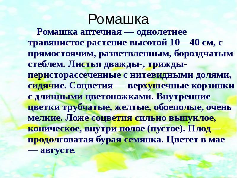 Текст описание цветка ромашка
