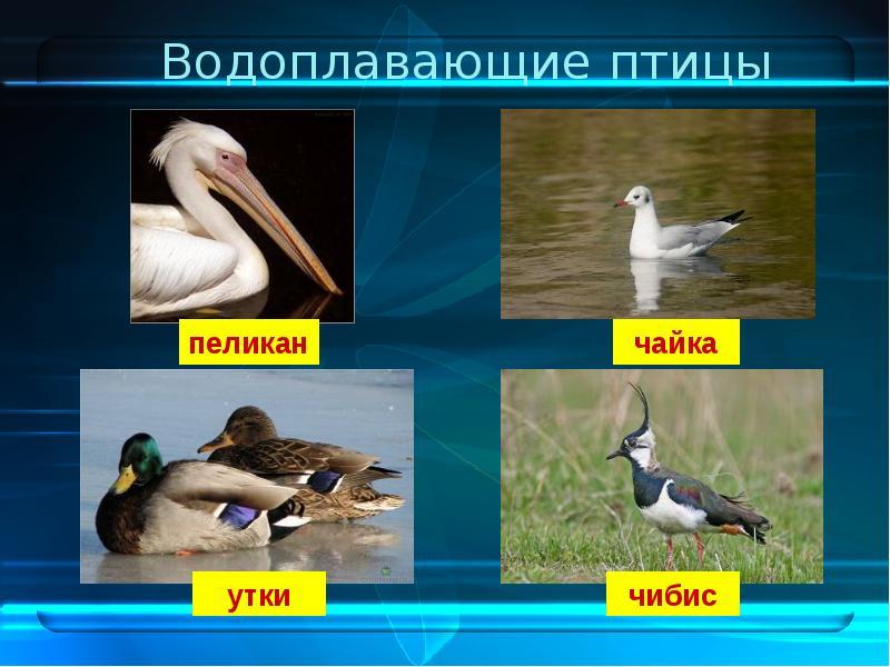 время картинки водоплавающих птиц с названиями подозреваю, что если