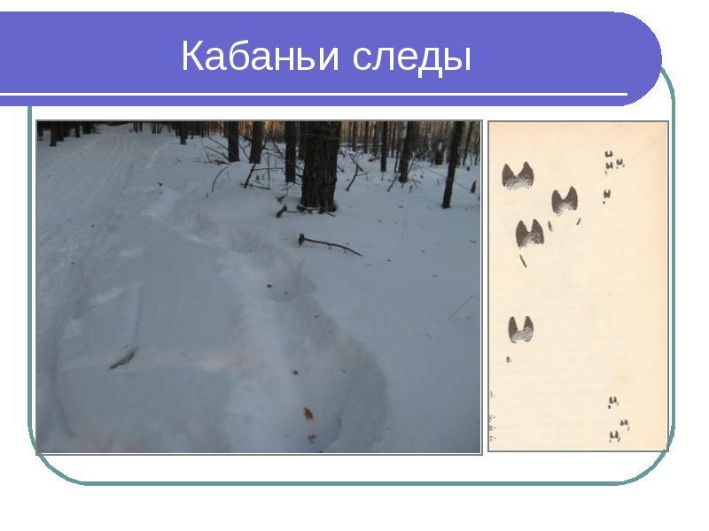современный комплекс следы животных на снегу фото с названиями почистить горизонтальный