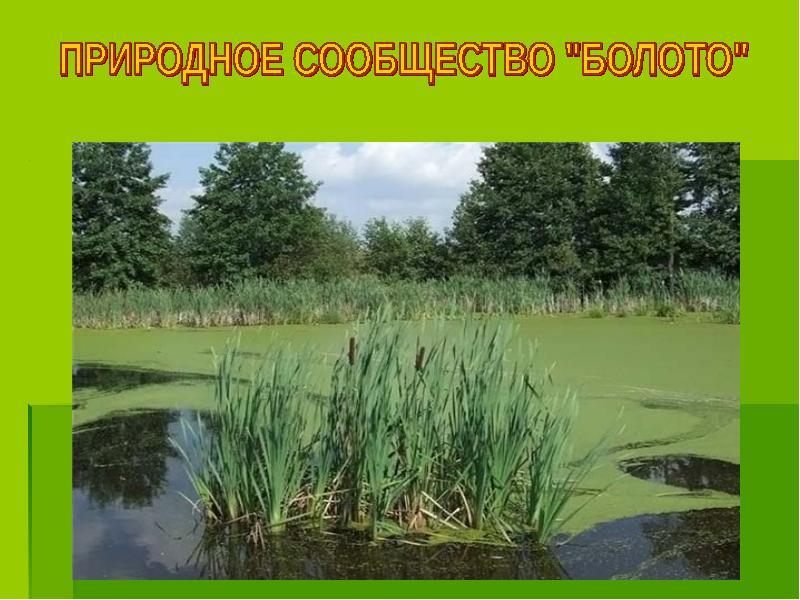 Реферат природное сообщество болото 5992