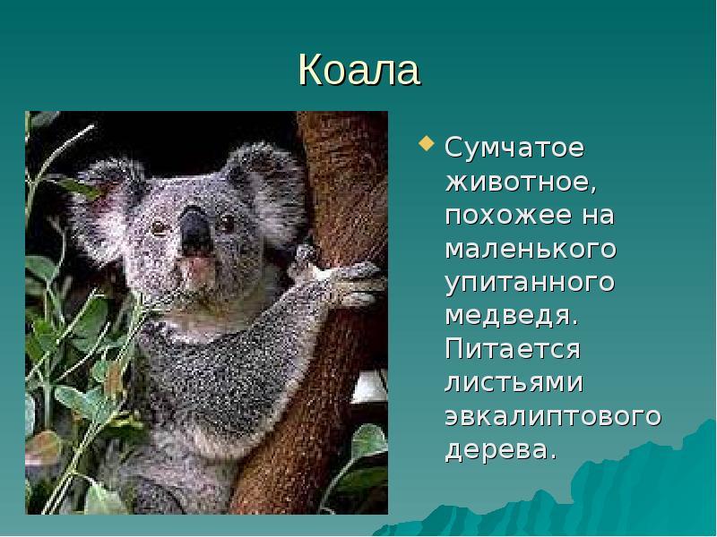 Животные австралии картинка и описание
