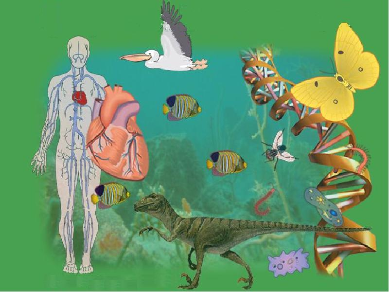 Биология темы в картинках