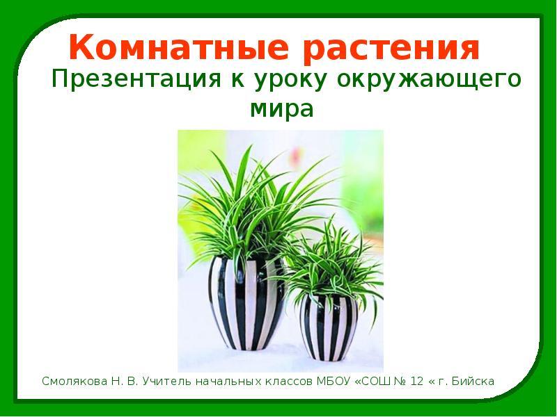 Доклад о комнатных растениях окружающий мир 69