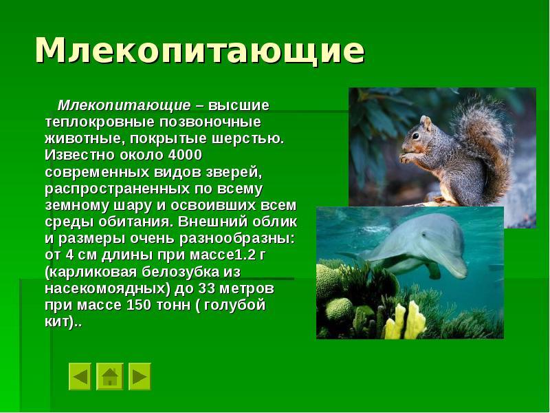 Млекопитающие картинки с описанием