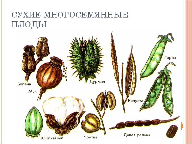 картинки с изображениями растений плодов и цветов осень, ней начало