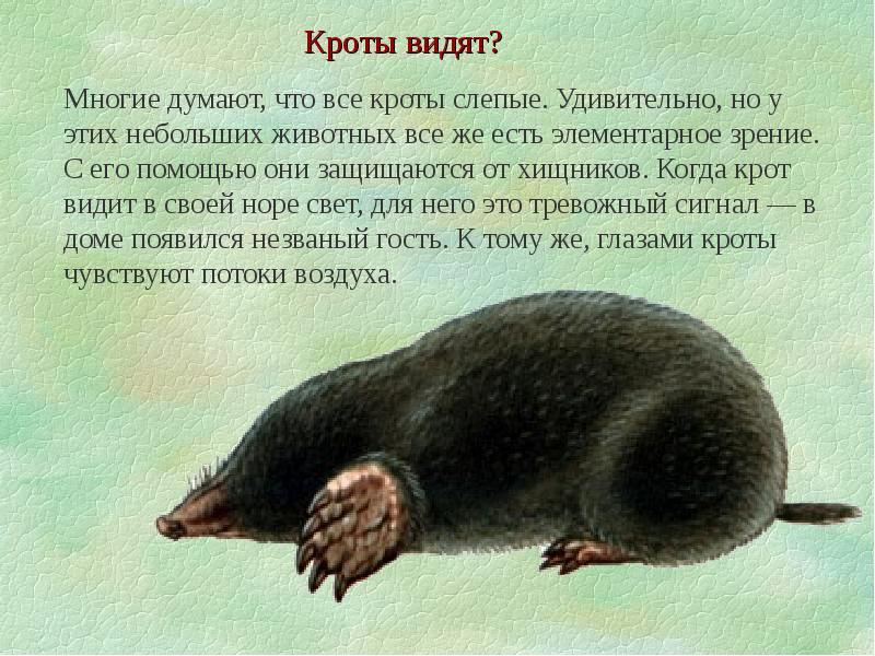 интересные факты о животных с картинками для 4 класса наши лерой