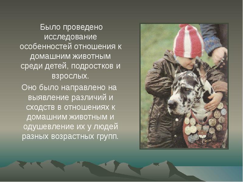 Проблема взаимоотношений человека и диких животных эссэ