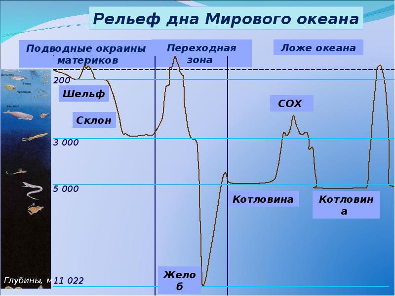 Рельеф дна океана картинка