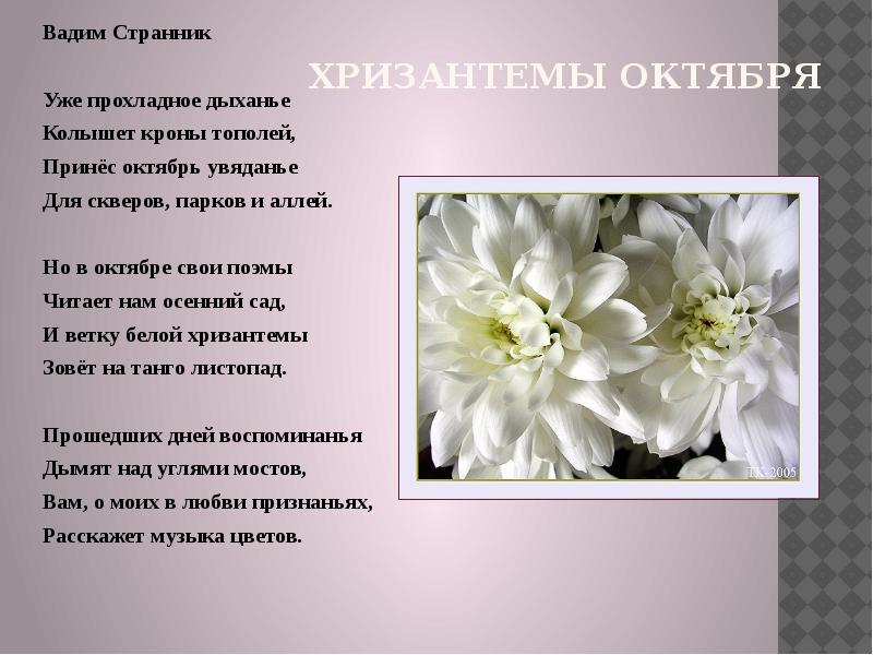 этот белые цветы стихи морском стиле