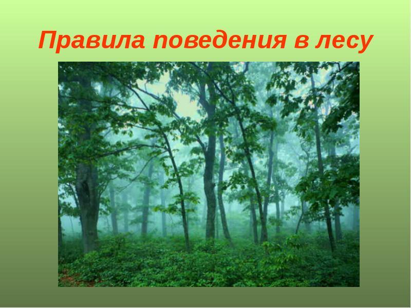 долю правила поведения в лесу фото зависит
