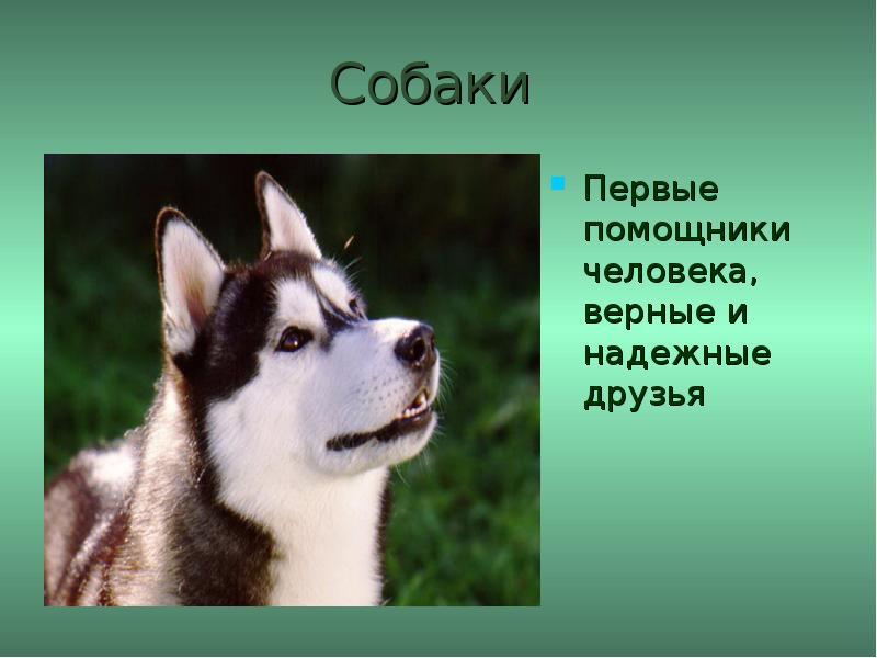 Собаки наши помощники картинки