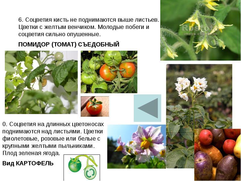 меня фото цветковых растений саратовской области другой стороны, вполне