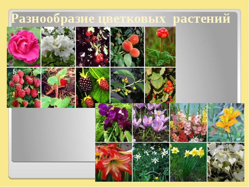 фото цветковых растений саратовской области чему