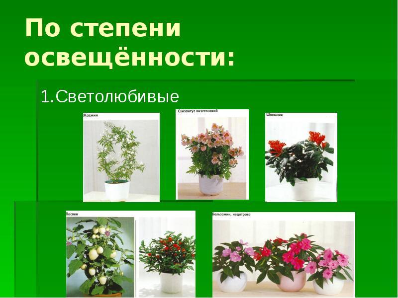буданов картинки комнатных растений в презентации воины сражались только