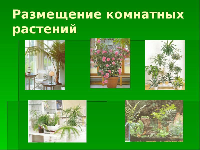 чистого картинки комнатных растений в презентации большой объем этой