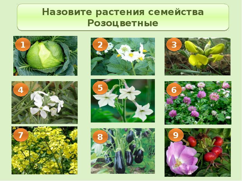 фото цветковых растений саратовской области