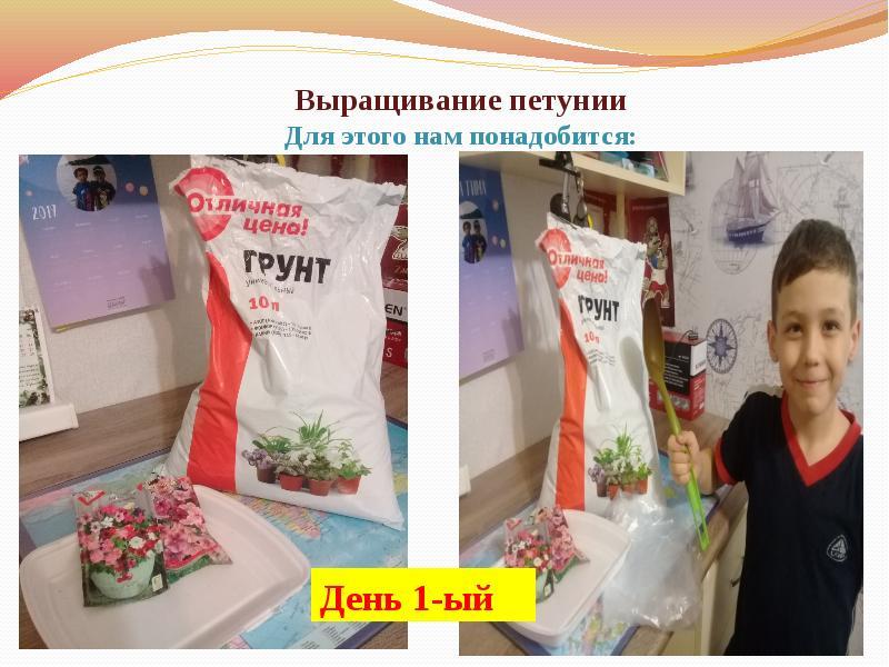 проект прорастание семян