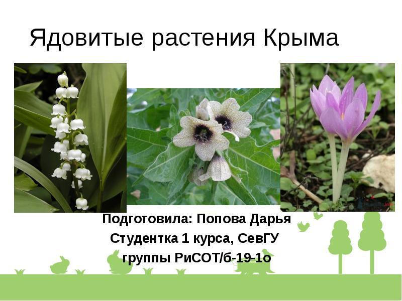 изготавливают все ядовитые цветы крыма фото с описанием если взять цифровые